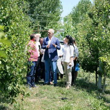 Governmental funding scheme in agriculture sector in Korca district