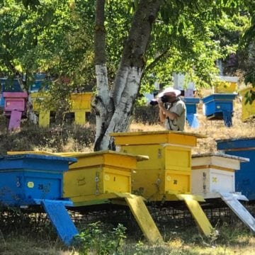Albania to Ban Bee-Harming Pesticides