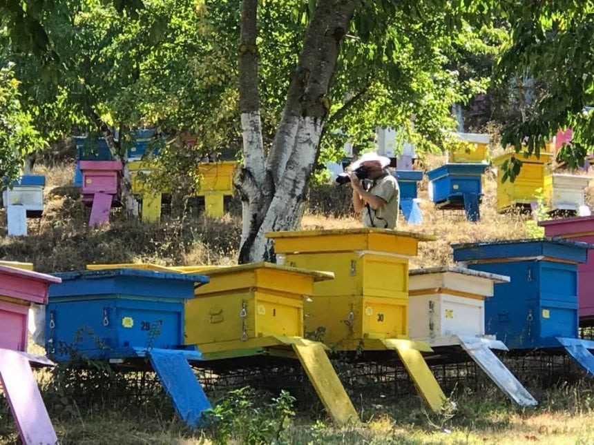 Albania to Ban Bee-Harming Pesticides