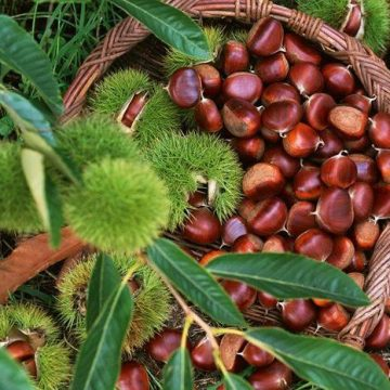 Albanian Products: Chestnuts