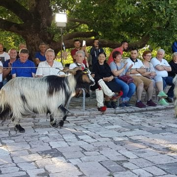 Pan Festival Celebrated for First Time in Nivica