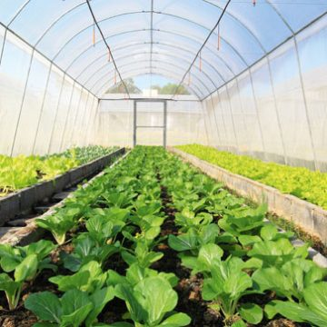 Farmers and Rural Economies to Get Grants for Agricultural Development