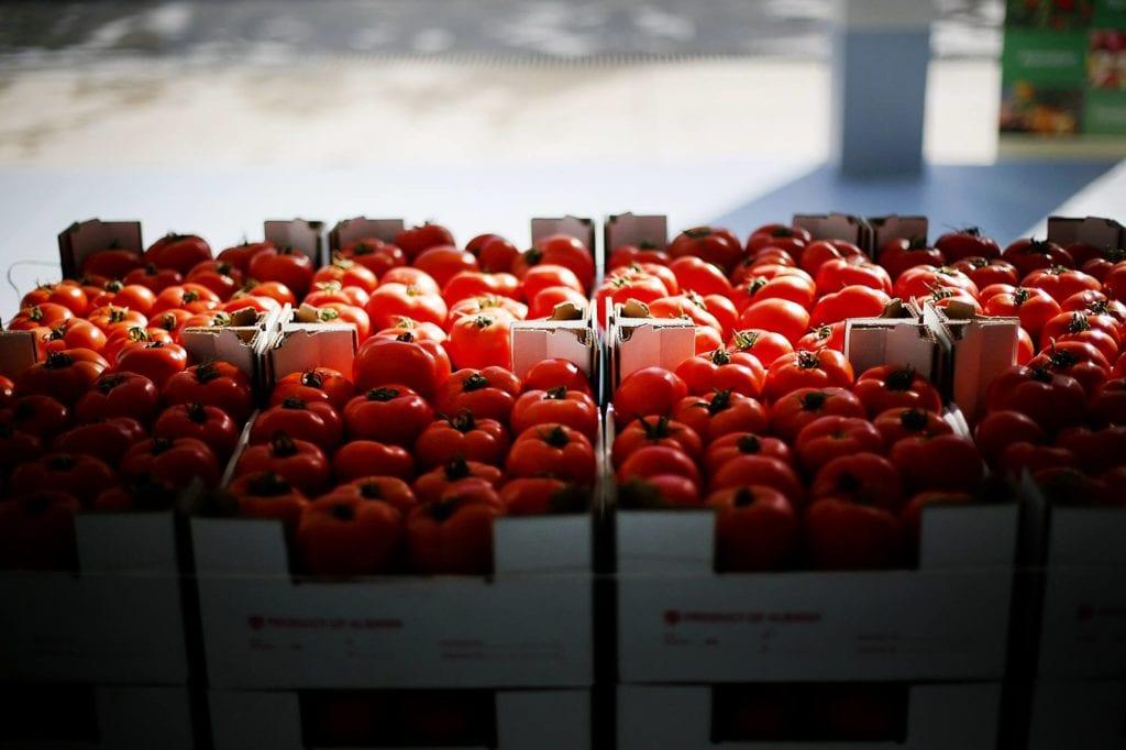 Albanian tomatoes export EU