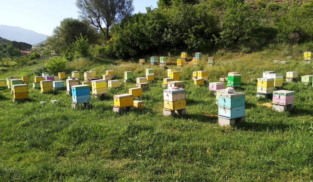 BeeAlbania Honey Trail