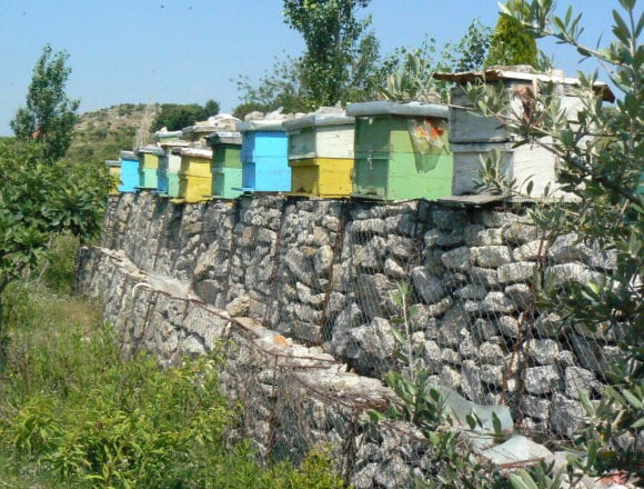The Honey Trail, Discover the Sweetest Tour in Albania