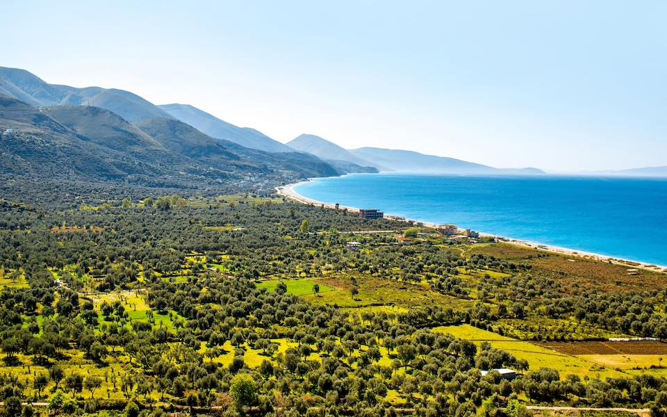 Olives in Albania