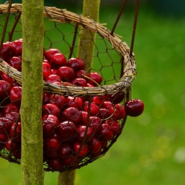 Cherry Festival in Dibra, Food, Nature, and Music