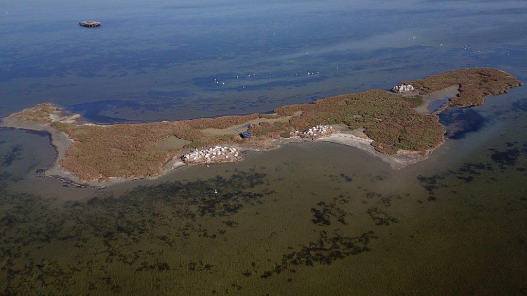 the nesting island of Dalmatian Pelicans