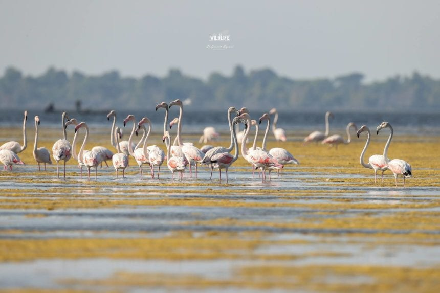 Where to Watch Flamingos, Dalmatian Pelicans and Other Birds in Albania