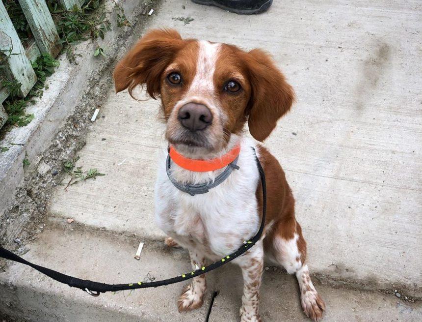 Foglia Rescue dog