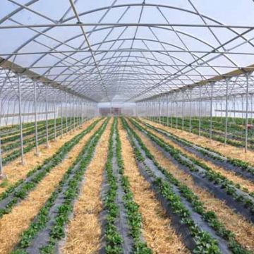 Investments in greenhouses to increase agricultural production