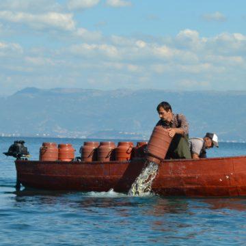 Over 1.5 million Koran Fingerlings Stocked into Ohrid Lake