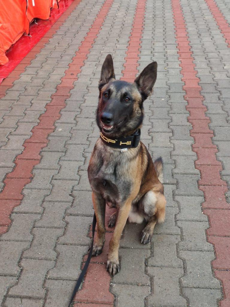 Oscar rescue dog