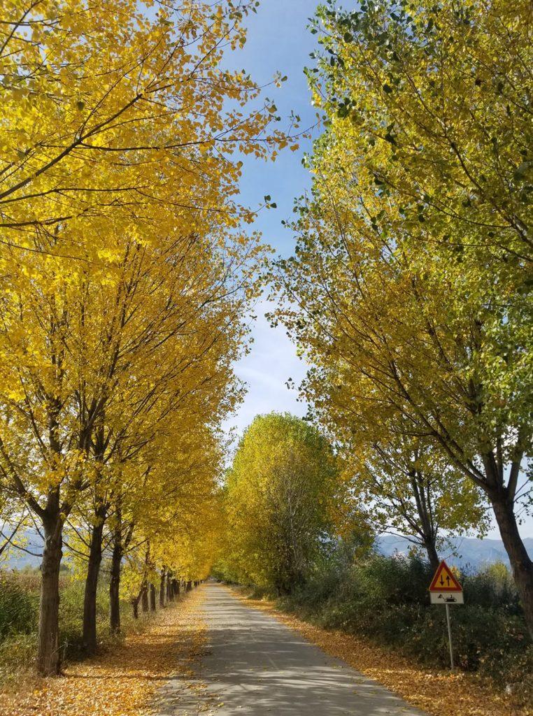 Autumn in Pogradec