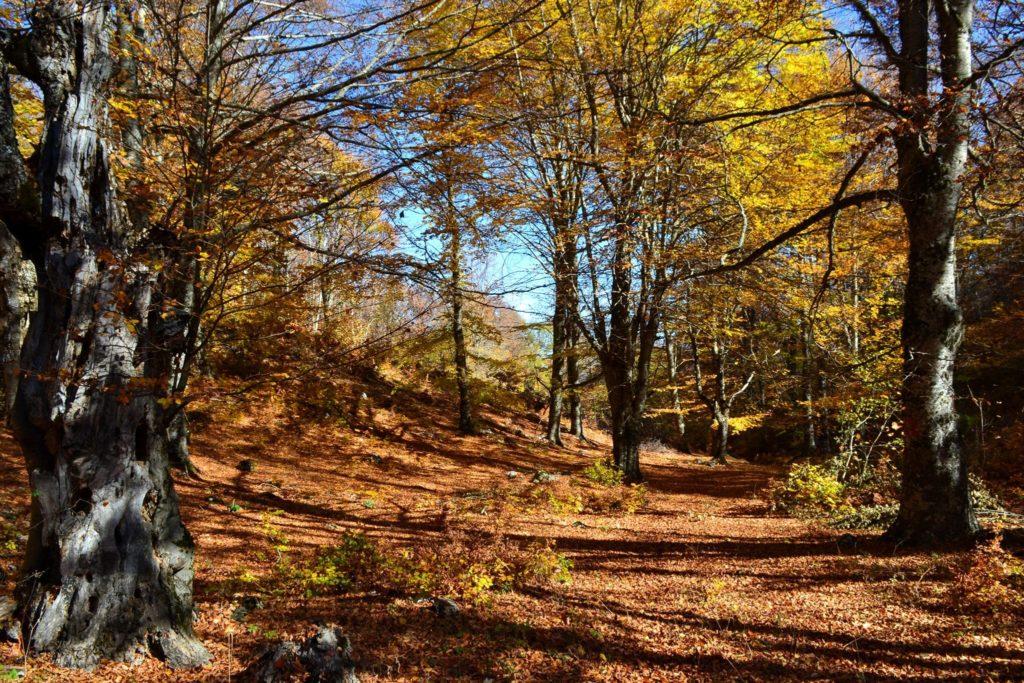 Autumn in Prespa