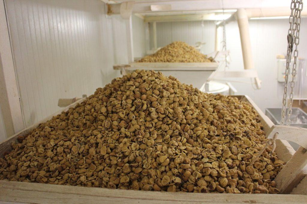 Tropoja chestnuts