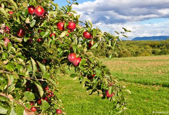 How to get Certified as an Agritourism Business in Albania