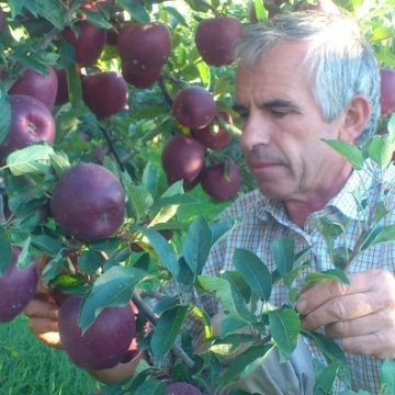 Project funded by USAID to establish fruit processing factory in Dibra region