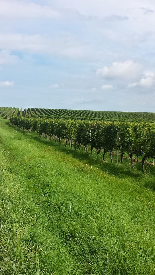 German Govt to Support Creation of Wine Routes in Albania