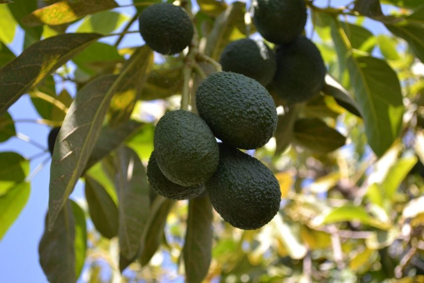 €1 Contract Paves the Way for €6.6mln Investment in Fruit Farming
