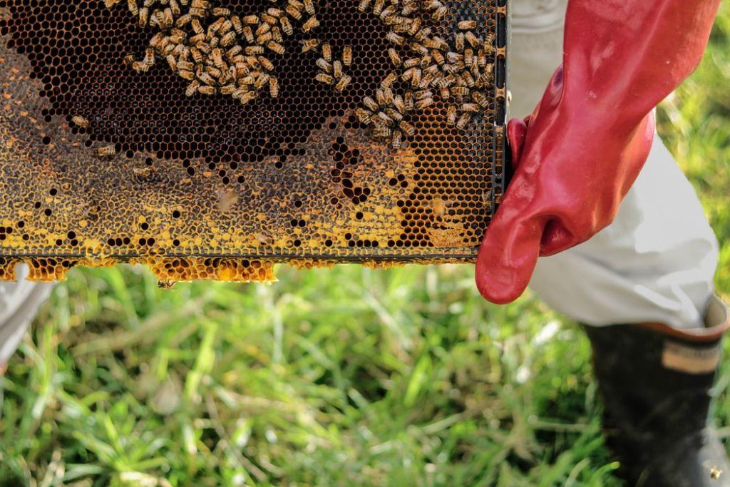 honey albania
