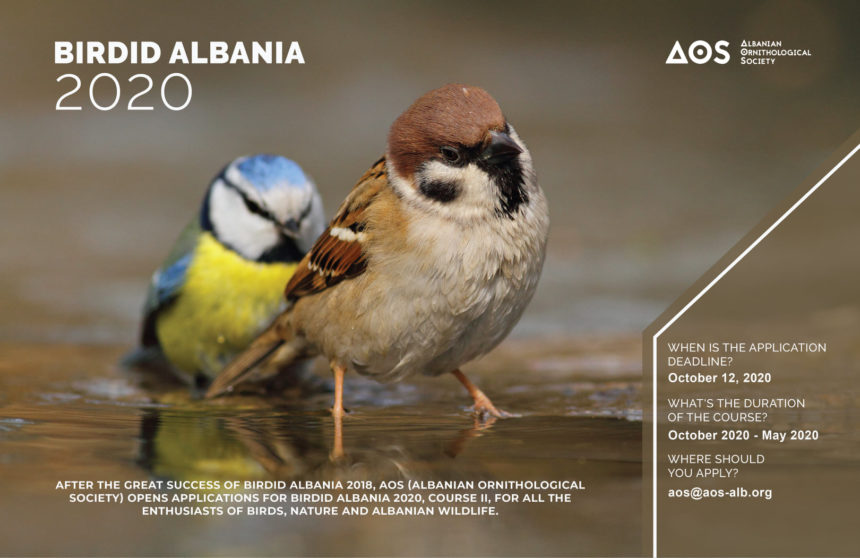 Last day to Apply for AOS's Bird Identification Albania Course