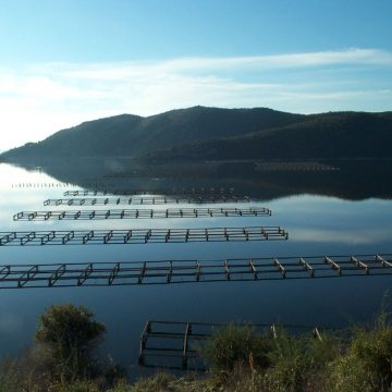 Some 56 Water Bodies open for Aquaculture Activities