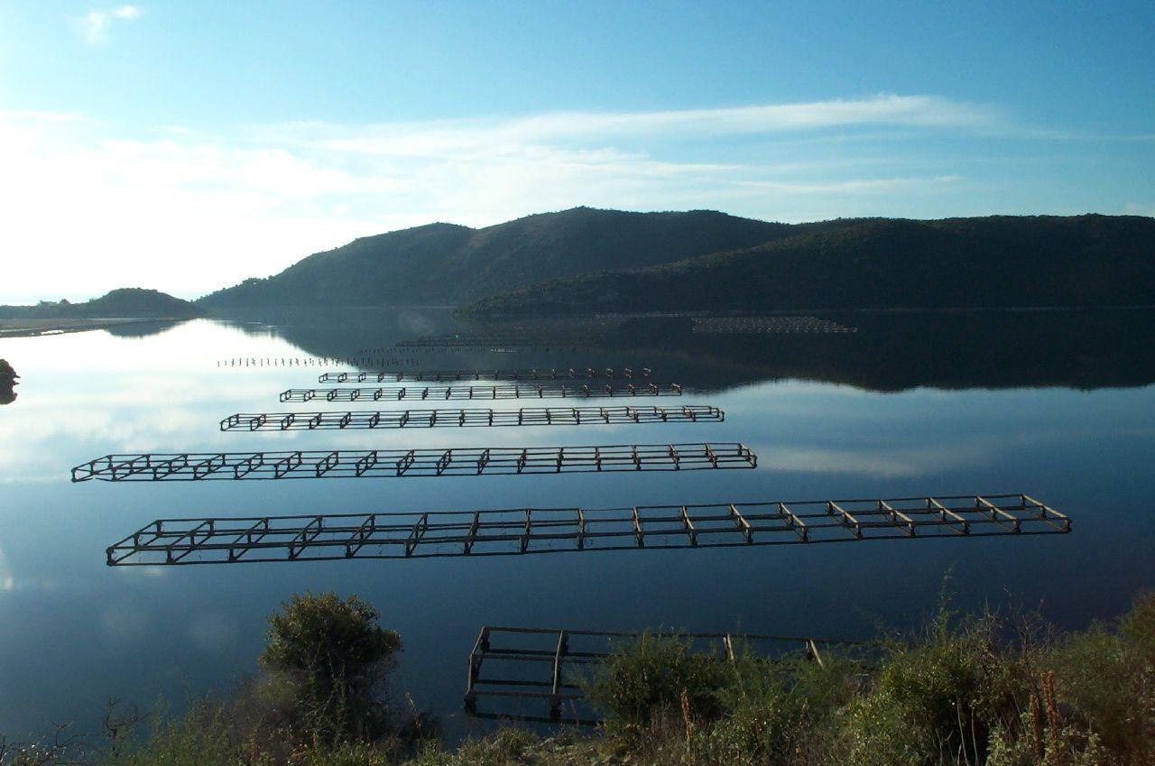 mussel farming butrint lake