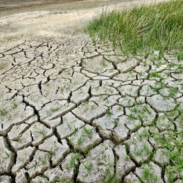 Prolonged Drought Takes Toll on Crops