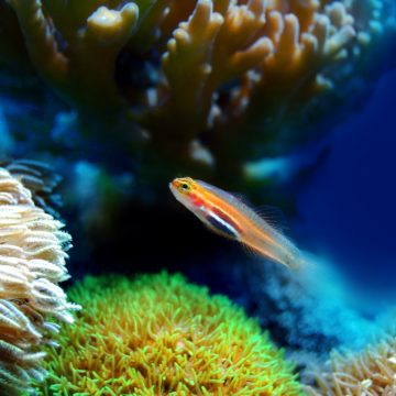Coral Reefs in Vlora Bay Threatened by Climate Change
