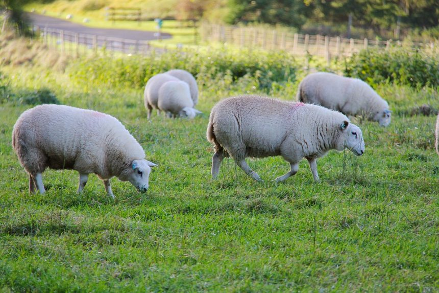 Only Farmers that Meet Safety Standards Can Benefit from Support Scheme