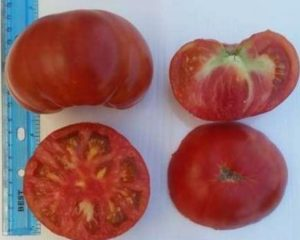 Dhoksati Tomato