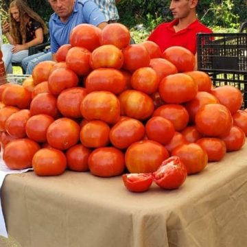 Albanian Products: Varieties of Heirloom Tomatoes in Albania