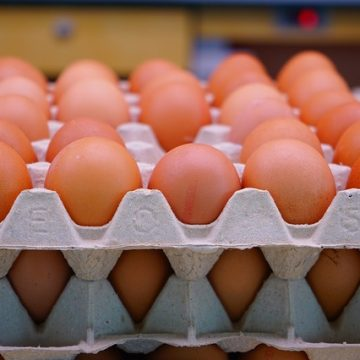 'Made in Albania' eggs exported for the first time in EU market