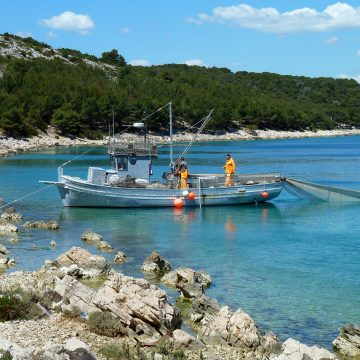 Albania's Fish Processing Industry at Risk of Drowning