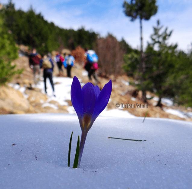 flower snow