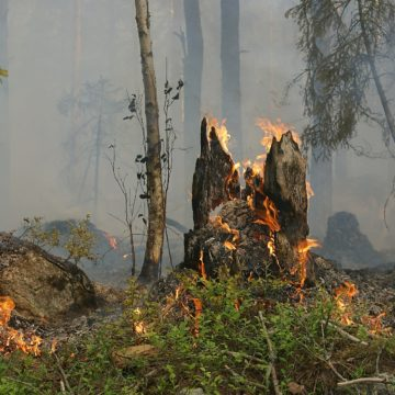 Recent Fires throughout Albania Were Intentionally Set