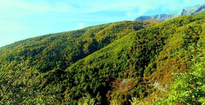 Chestnuts Massif in Tropoja to become a state Protected Area