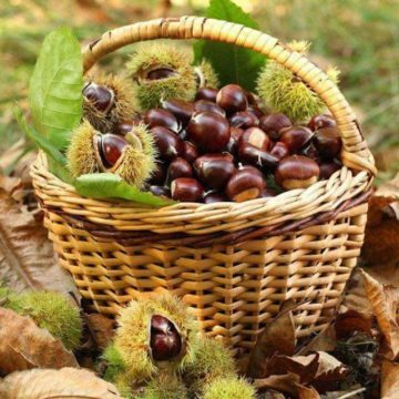 Join the Harvest Festival and Celebrate Dibra's Heritage