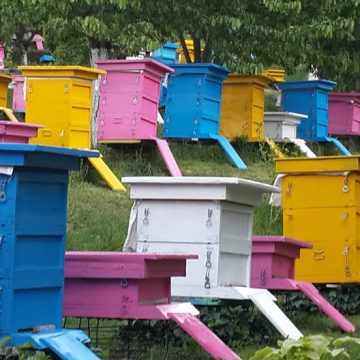 Albanian Farmers Focus on Breed Improvement and Honey Production