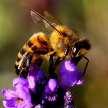Honey Bee Tourism in Albania, Walk the Sweet Routes