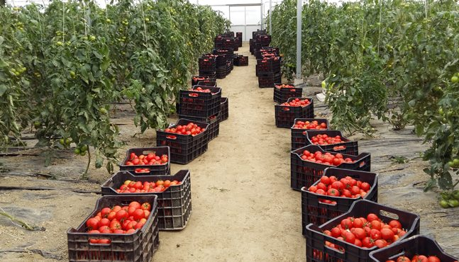 Agrocon Albania, the Albanian Farm Introducing the Highest European Standards