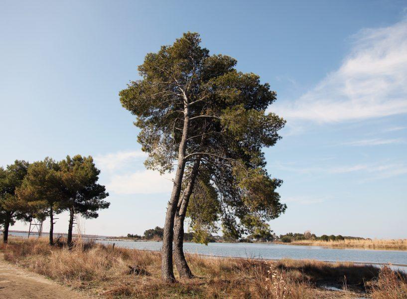 kune-vain-tale nature park