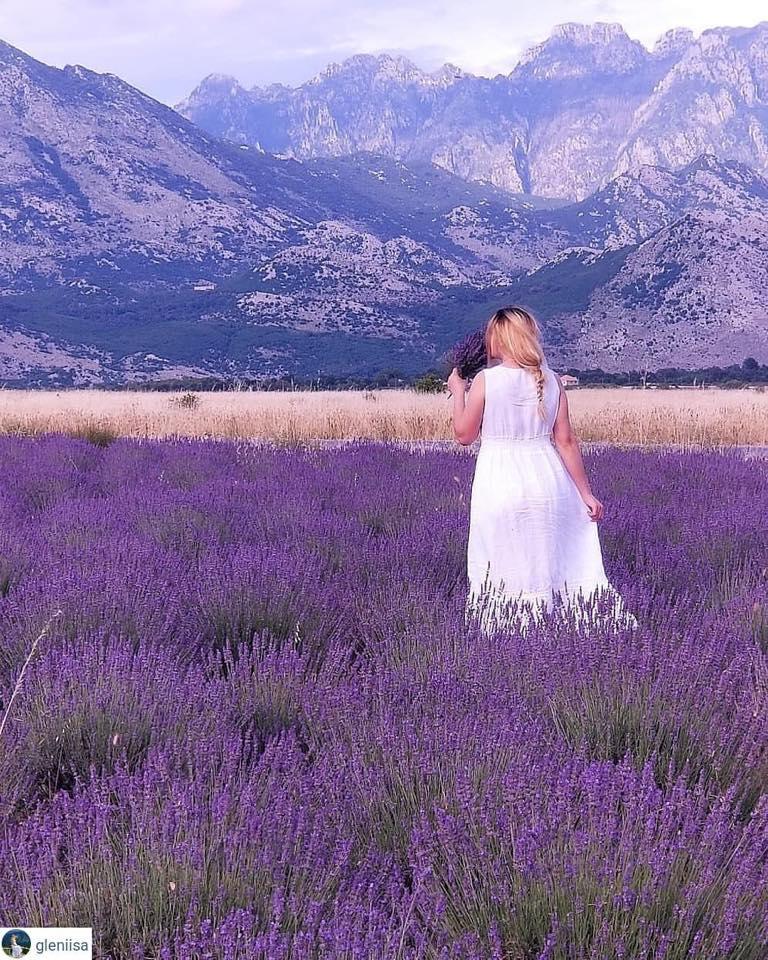 Lavender Albania