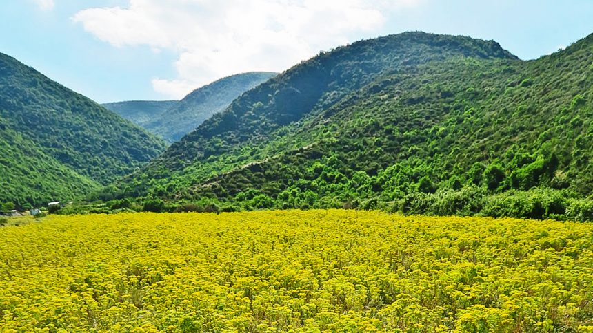 Agromining, Albania part of Farming for Metals Project