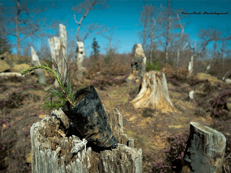 Forests Census to Show what Happened to Albanian Forests Since 1990