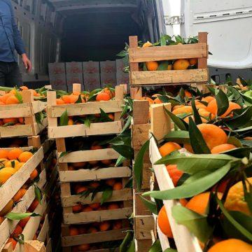 Albanian Products: Konispoli Mandarins