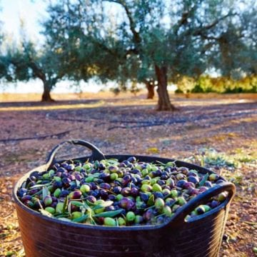 Albanians, Top Global Consumers of Table Olives