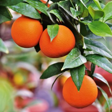Albania among Top Orange Producers in Europe in 2018