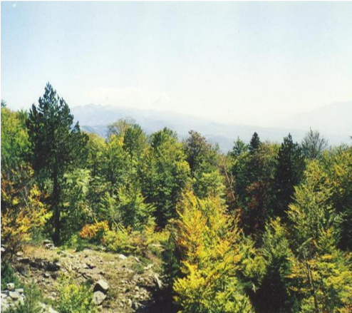 forest of paunchy kostenje